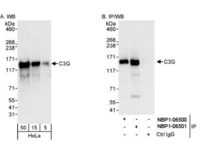GRF2 Antibody