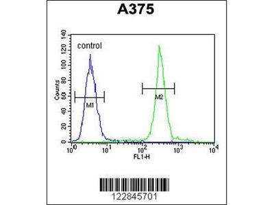 Rabbit Anti-ARL8A, ID Antibody