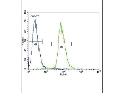 Rabbit Anti-ETV5, NT Antibody