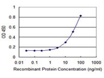 Mouse Anti-Sulfotransferase 4A1 Antibody