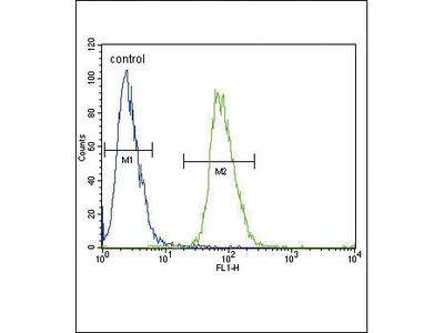 Rabbit Anti-ADH4, CT Antibody