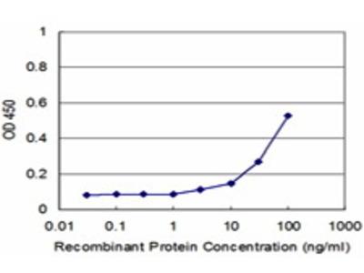 Mouse Anti-PPP2R5C Antibody