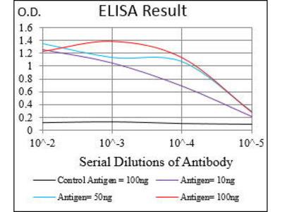 Mouse Anti-RING1 Antibody