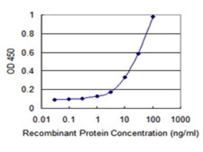 Mouse Anti-ARNT2 Antibody