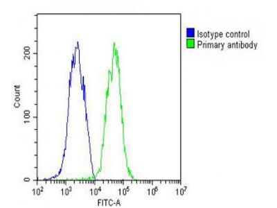 Anti-ID1 antibody