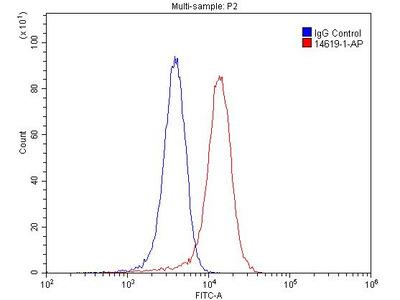 NMUR1 antibody