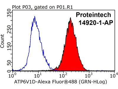 ATP6V1D antibody