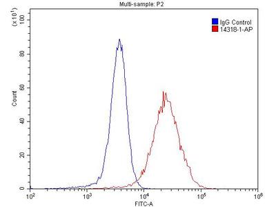 Thrombomodulin Polyclonal Antibody