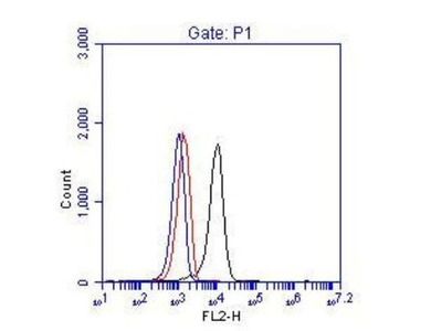 Rabbit Polyclonal BCR Antibody