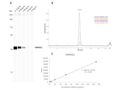 TMPRSS2 Antibody