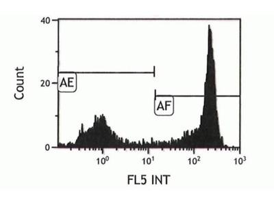 Ly-6G/Ly-6C Monoclonal Antibody (RB6-8C5), PE-Cyanine7