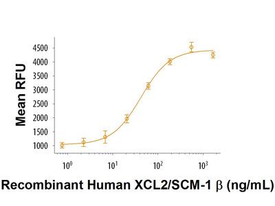 XCL2 /SCM-1 beta Protein