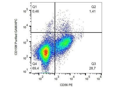 CD158f antibody