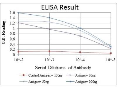 Mouse Monoclonal CEBP Beta Antibody