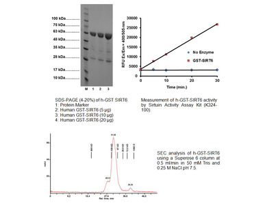 Active SIRT6 (GST-tagged), human recombinant