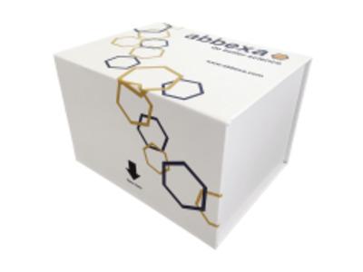 Human Aryl Hydrocarbon Receptor (AhR) ELISA Kit