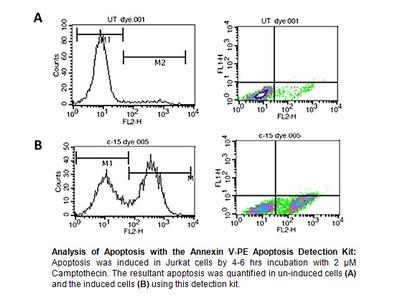 Five-Minute Apoptosis Detection Kit