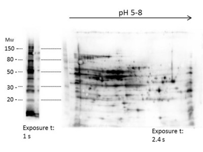 E.coli Combined HCP Antibody