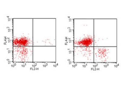 CD3e Phycoerythrin Antibody