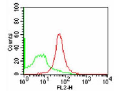CD47 Phycoerythrin Antibody