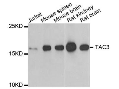 TAC3 Polyclonal Antibody
