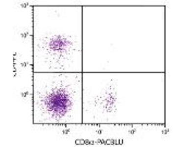 Rat Anti-CD8a Antibody (FITC)