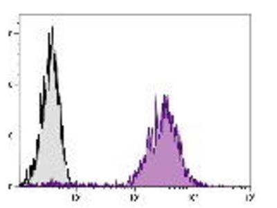 Rat Anti-CD71 Antibody
