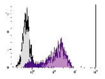 Mouse Anti-CD62E Antibody (APC)