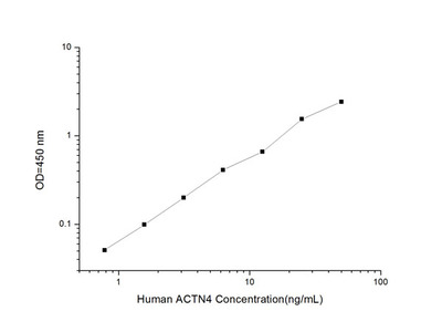 Human ACTN4 (Actinin Alpha 4) ELISA Kit