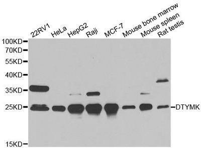 DTYMK Polyclonal Antibody