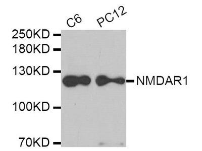 GRIN1 Polyclonal Antibody
