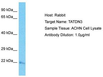 Rabbit Polyclonal Anti-TATDN3 Antibody