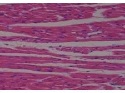 Rat Multi-Organ Tissue MicroArray (Normal)