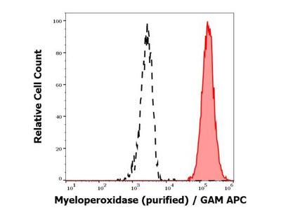 Myeloperoxidase / MPO Antibody (MPO421-8B2)