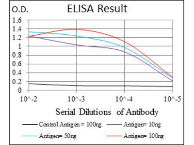 anti-Neurofilament, Light Polypeptide (NEFL) antibody