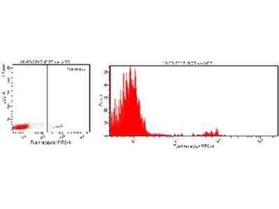 anti-T cell receptor alpha variable 6-3 (Trav6-3) antibody