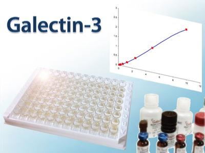 BGM Galectin-3 LGALS3 RUO ELISA