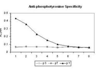 Phosphotyrosine Antibody