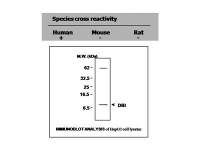 DBI antibody