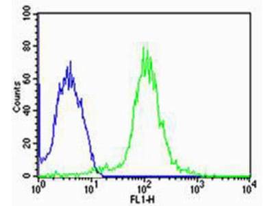 TUBA1C Antibody (N-term)
