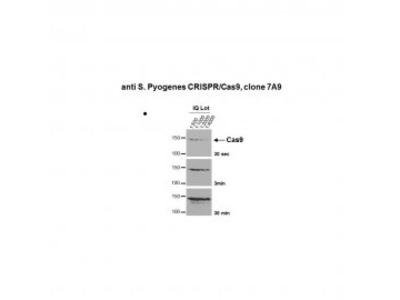 Mouse Anti- CRISPR/Cas9 [7A9-3A3]