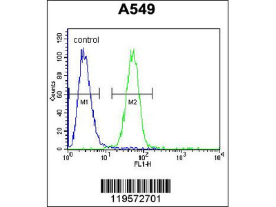COP1 Antibody (N-term)