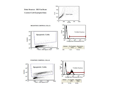 ApoBrdU Red DNA Fragmentation Kit