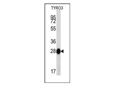 anti TYRO3