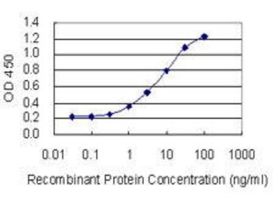Mouse Anti-CYP1A2 Antibody