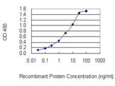 Mouse Anti-P4HA3 Antibody