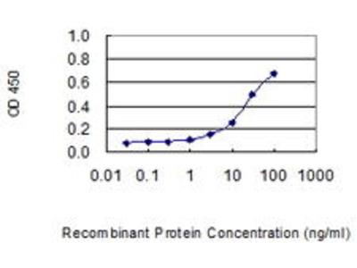 Mouse Anti-P11 Antibody
