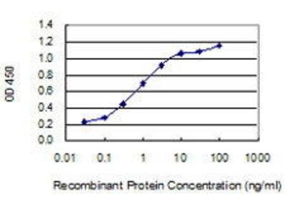 Mouse Anti-CORT Antibody