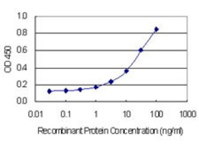 Mab Mo x human FIGN (fidgetin) antibody