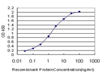 Mouse Anti-CUTL1 Antibody